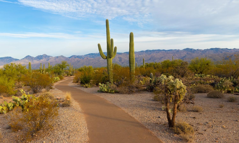 Possibility of Legal Marijuana Already Upsetting Arizona Lawmakers