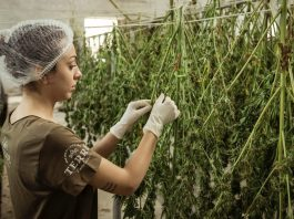 Congress Takes Issue With The (Awful) DEA Hemp Rule