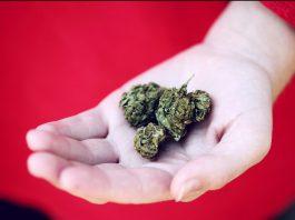 is cannabis addiction real