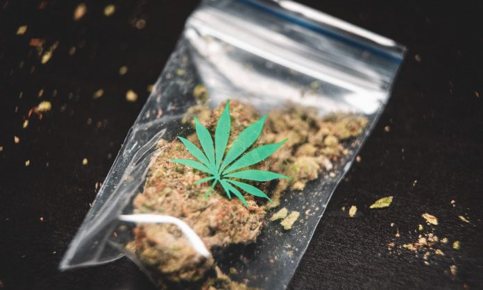 ground cannabis on clear plastic bag