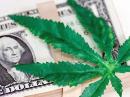 Election Results Getting You Stoked About Cannabis Stocks? Here's How To Invest