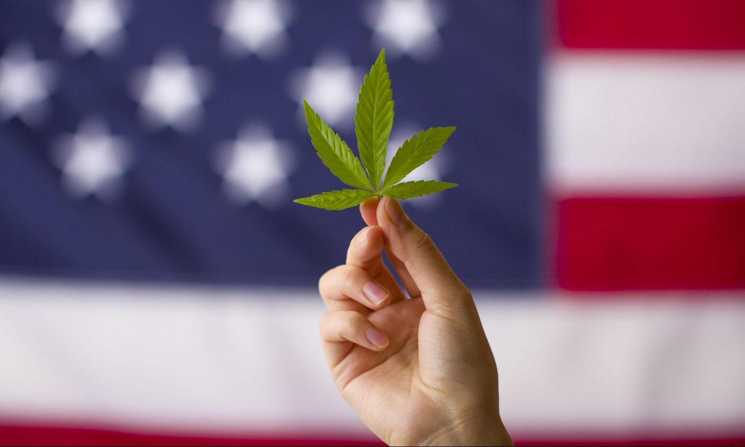 could marijuana legalization unite a divided country