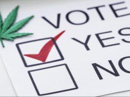 Did Marijuana Prohibition Cost Trump The Election?