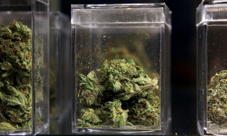 Marijuana Is Biggest Winner In The 2020 Election