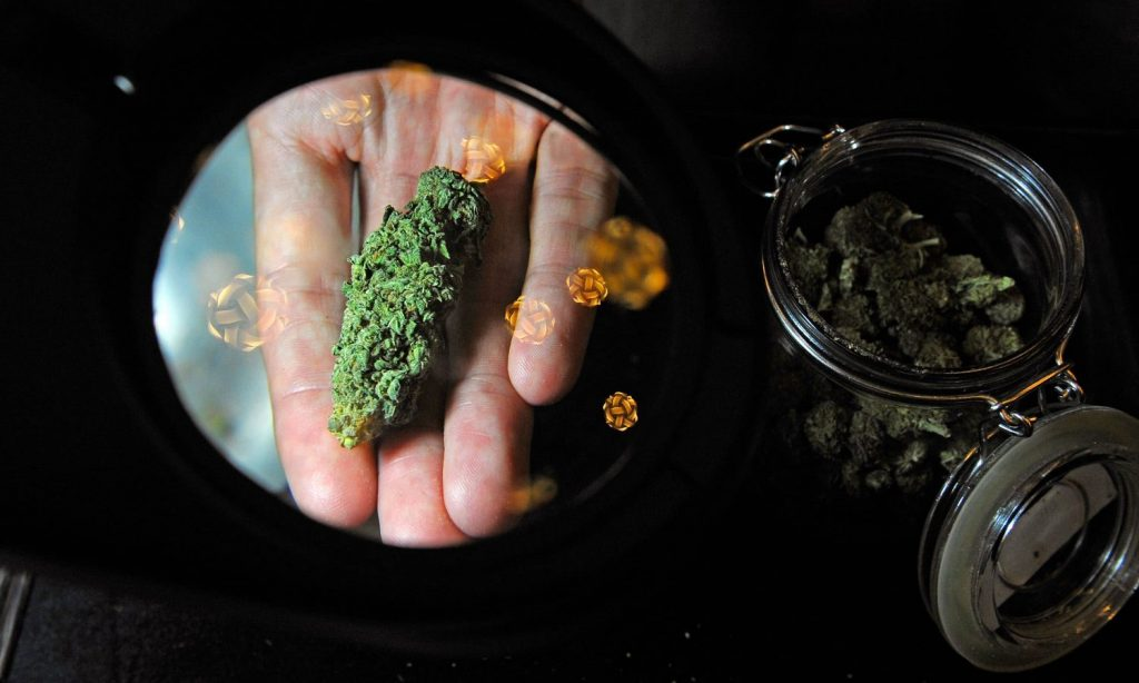 Here's Why You Have To Trust Your Dispensary