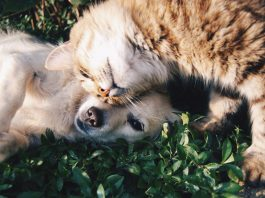 The Evolving Relationship Between Cannabis & Modern-Day Veterinary Medicine