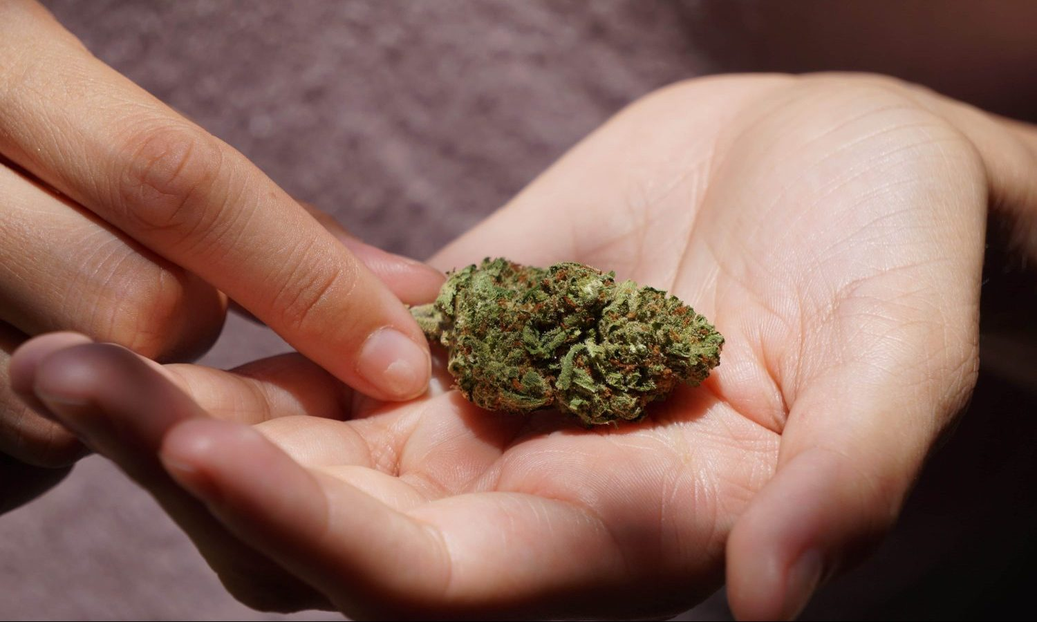 What Americans Can Learn From A British Study On Hashish Potency