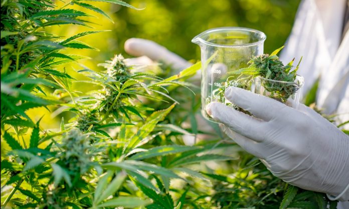 House Approves Bill To Enhance Medical Marijuana Research
