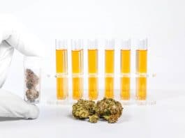The USP Lays Out Guidelines For Medical Cannabis