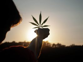 As Cannabis Reform Continues In 2021, Here's What To Expect