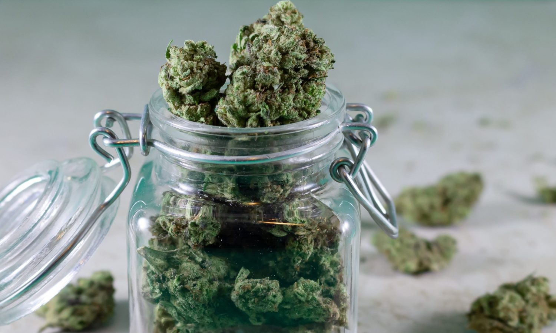 A Cannabis Grower's Advice On Choosing The Right Strain