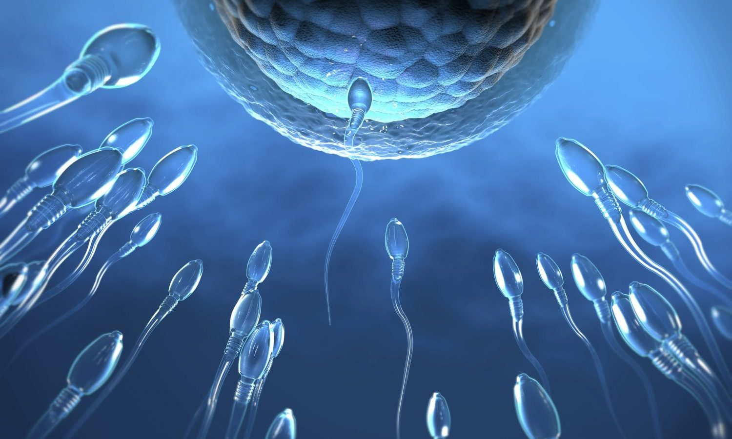 Does Using Cannabis Decrease Your Sperm Count?