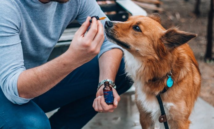 Michigan Now Allows Veterinarians To Discuss CBD Treatment With Pet Owners