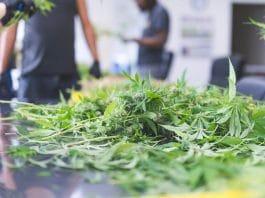Should I Invest In My Friend's Marijuana Business?