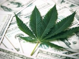 The Rise Of Medical Marijuana- 5 Financial Forecasts