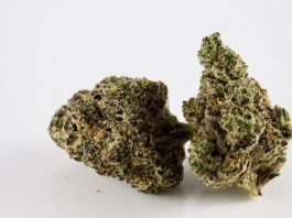 10 Most Potent Sativa Strains On The Market In 2021