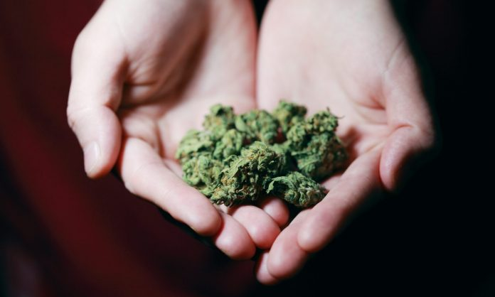 Federal Marijuana Legalization Could Mimic End Of Alcohol Prohibition