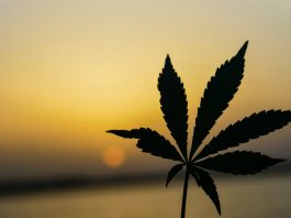 Why Cannabis Operators Expect Record 420 Despite Coronavirus Concerns