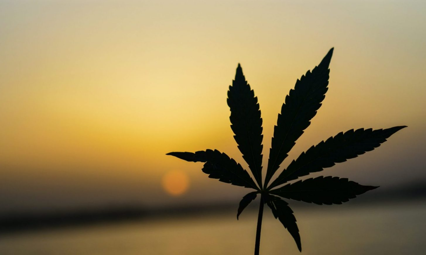Why Cannabis Operators Expect Record 420 Despite Coronavirus Concerns