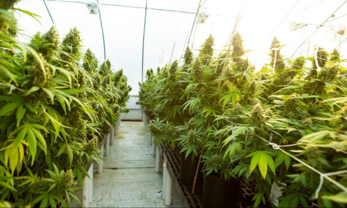 Will New York's Cannabis Law Create Sweeping Changes For Its Hemp Industry?