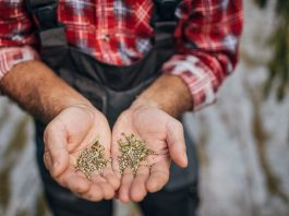 Forced Labor And Cannabis