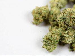 GOP Congressmen File Marijuana Legalization Bill, But Don't Get Too Excited