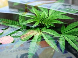 Increased Demand For Top Talent As Cannabis Industry Salaries Continue To Surge