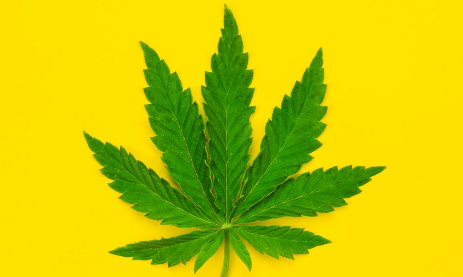 Will Weed Ever Be Federally Legal In The US? What The Experts Say
