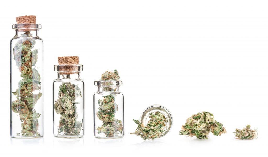 What Are Skunk, Haze, And Kush? The Foundation Of Today's Cannabis Strains
