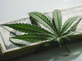 cannabis insurance money