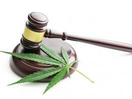 marijuana courts