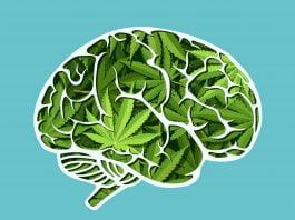 cannabis brain
