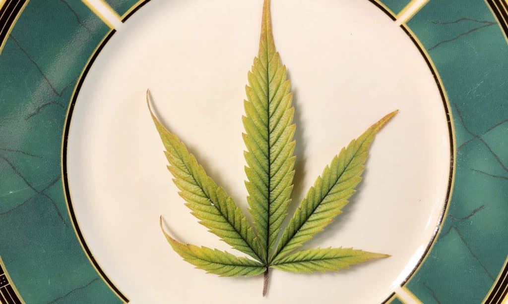 What Happens When You Eat Raw Marijuana?